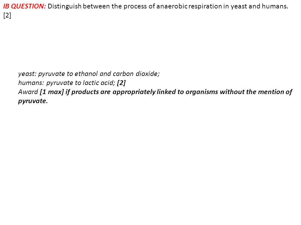 IB QUESTION: Distinguish between the process of anaerobic respiration in yeast and humans. [2]